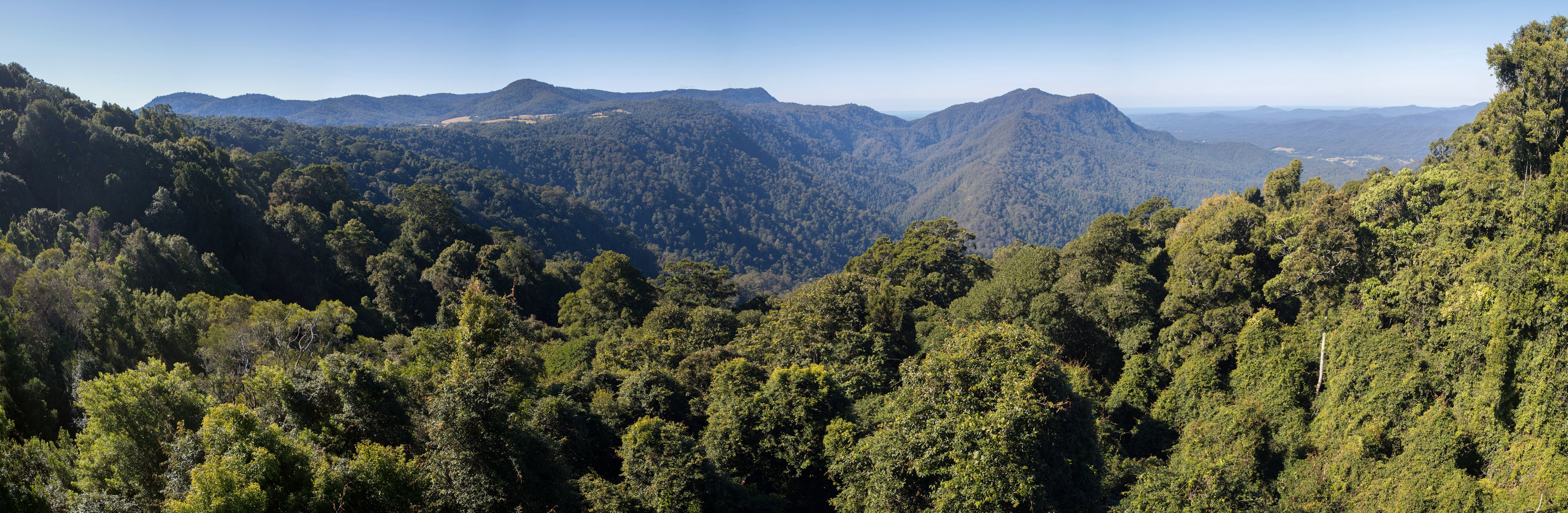View from Skywalk, Dorrigo National Park
