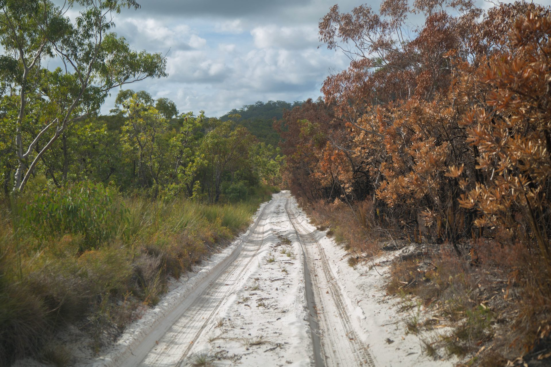 Northern forests scenic drive: where the fire stopped, Fraser Island
