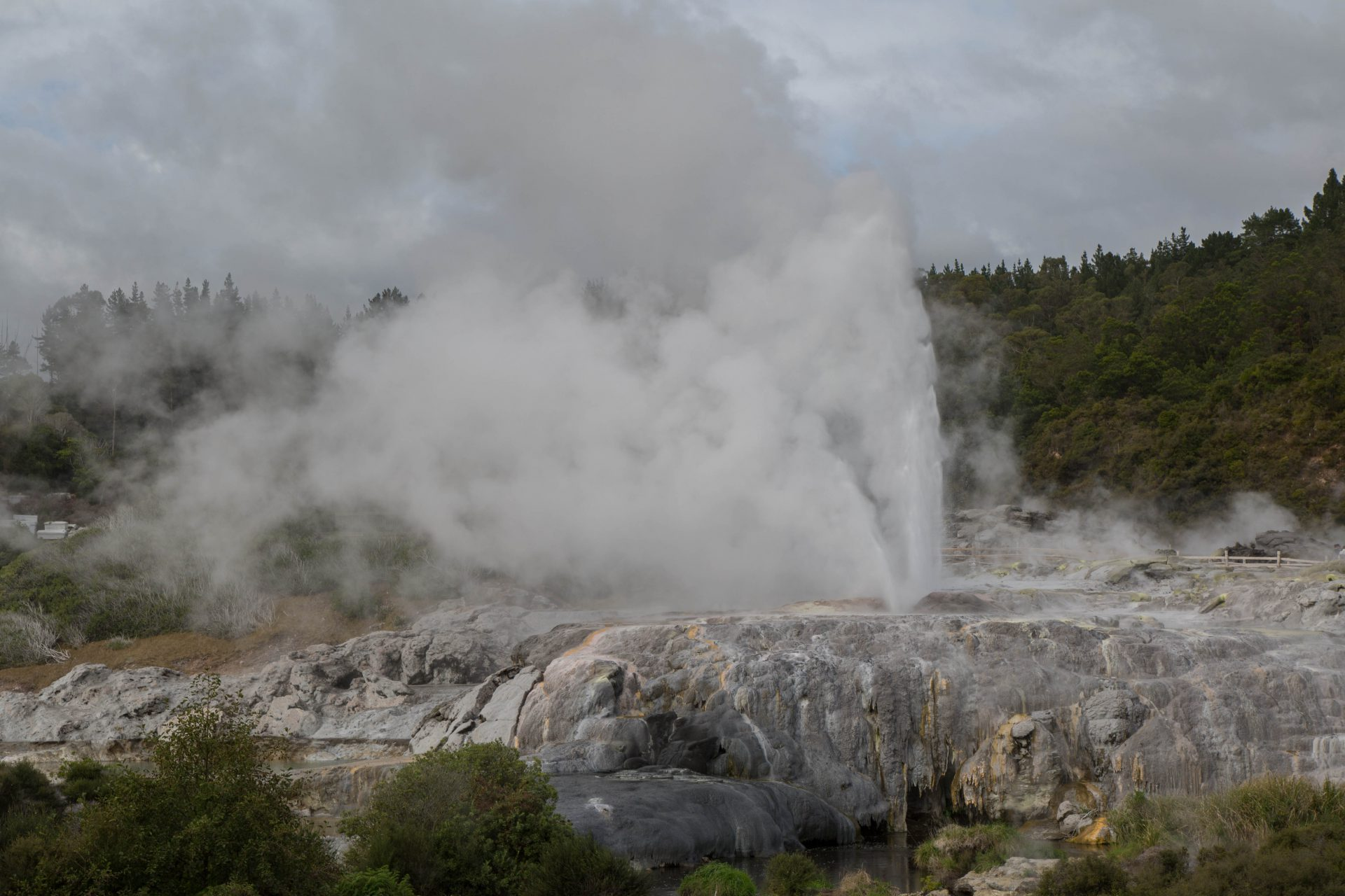 Pohutu Geyser, largest in the southern hemisphere, geothermal valley, Rotorua