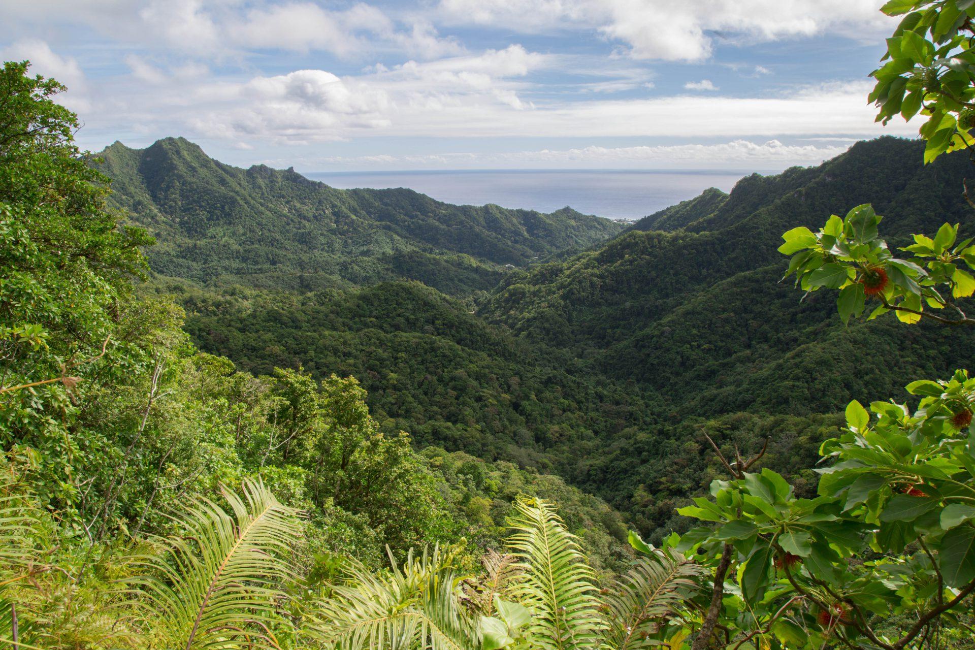 """Cross-island hike, Rarotonga, view from """"The Needle"""""""