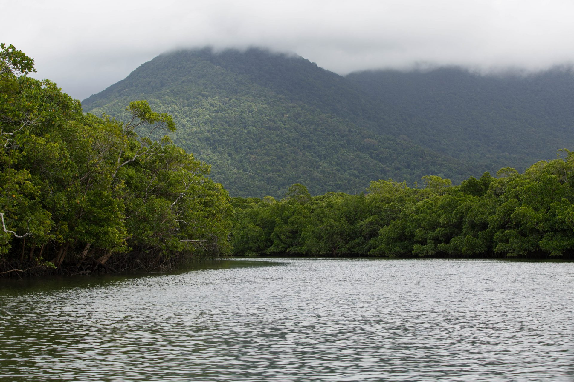Cooper Creek, Daintree National Park