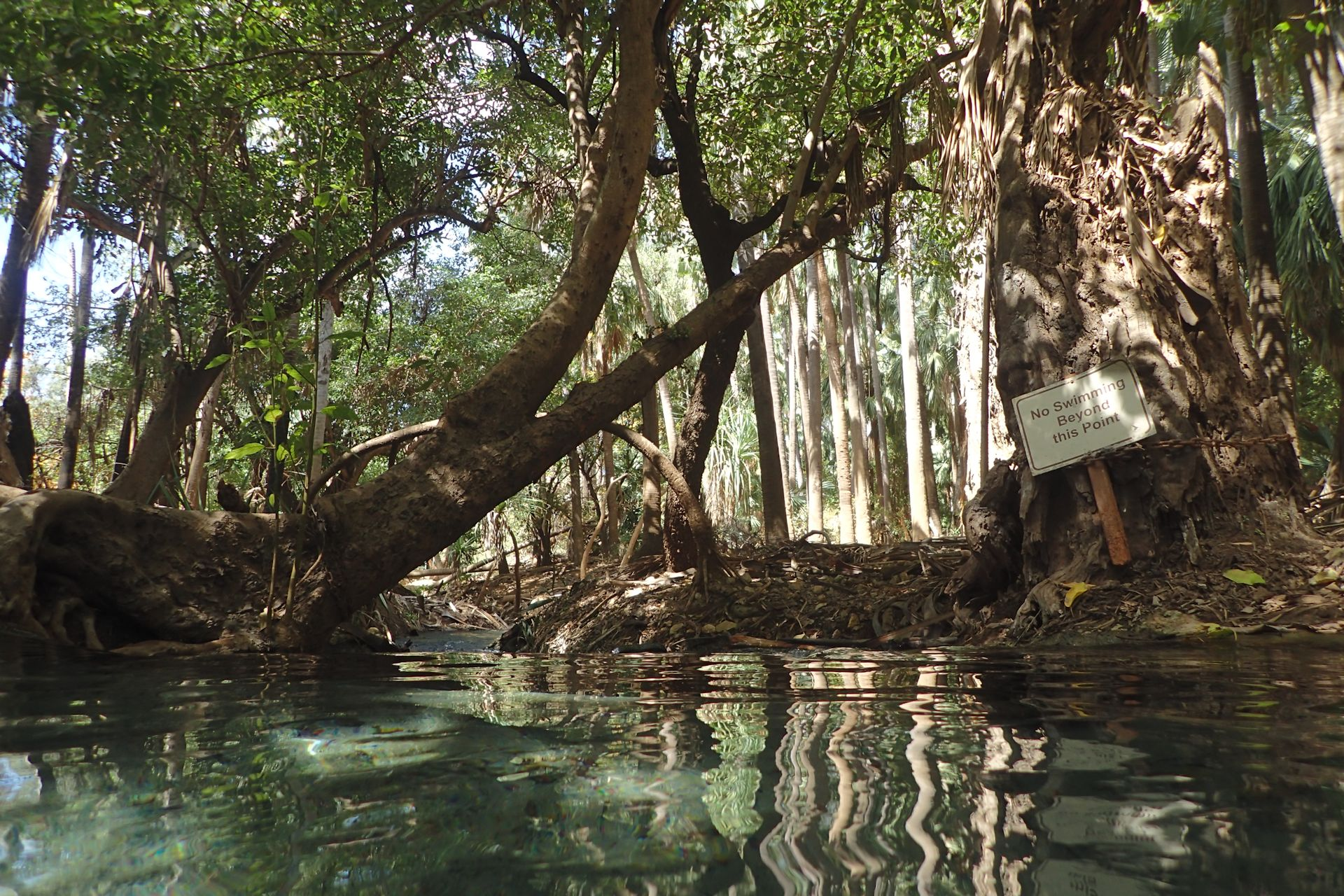 Thermal pools, Mataranka