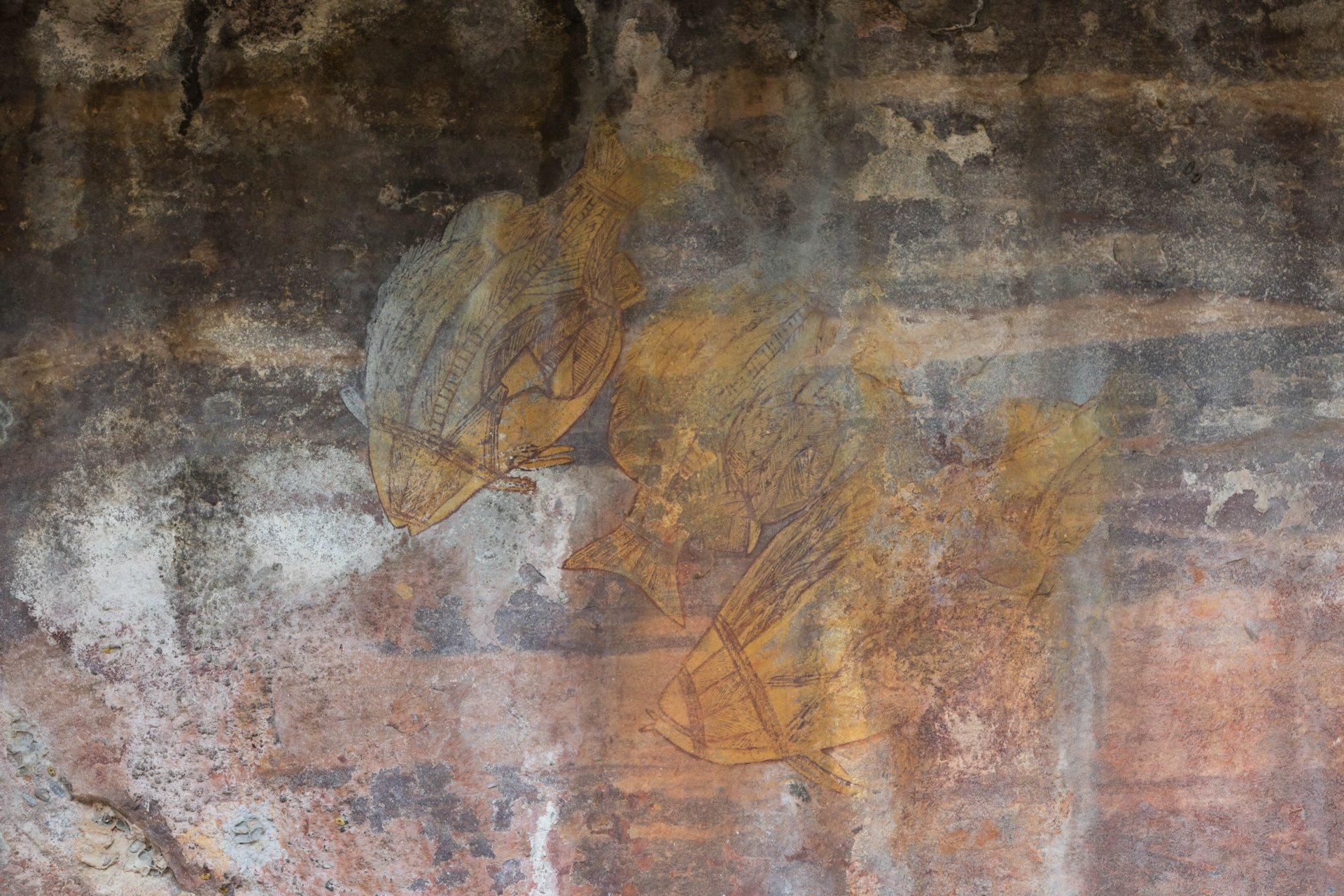 Aboriginal paintings showing Barramundi fish