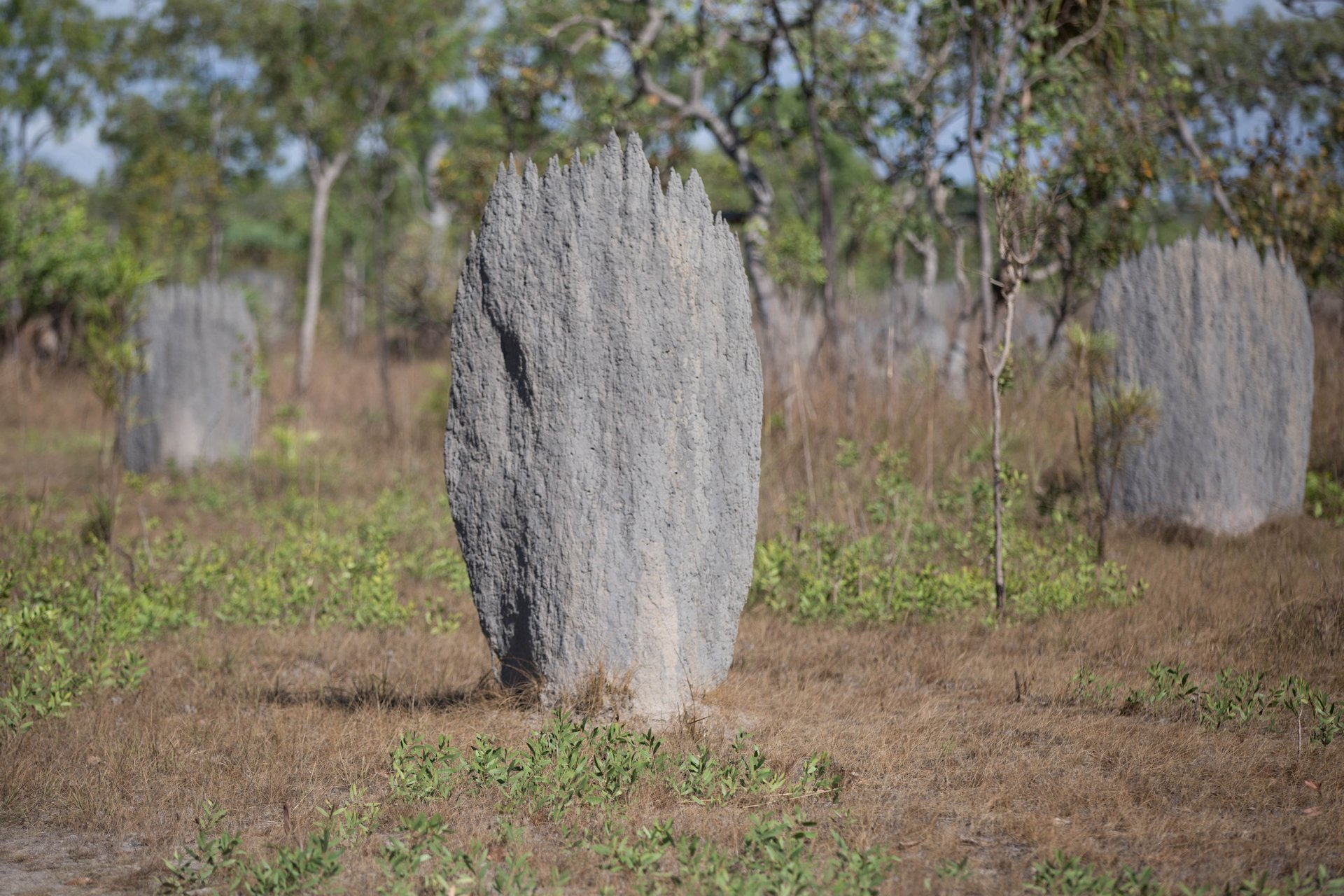 Magnetic Termite Mounds, Litchfield NP